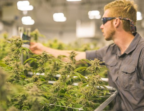 Light Radiation Gear: Making the Cannabis Community Safer